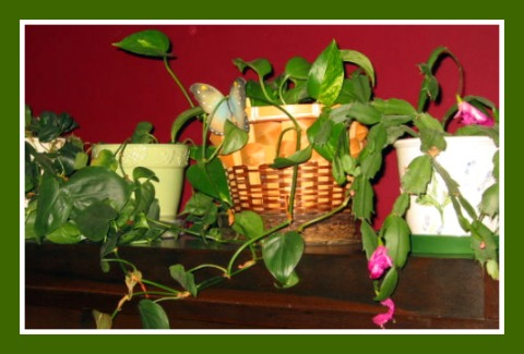 11-29-2010_Houseplants_005