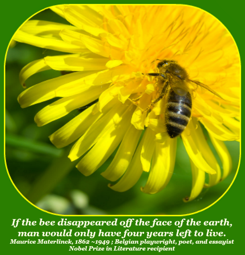 2017 07 19 Bee quote
