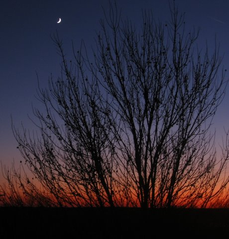 11-20-09_Crescent_moon__sunset