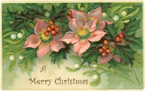 2015-12-23 pink-christmas-flowers