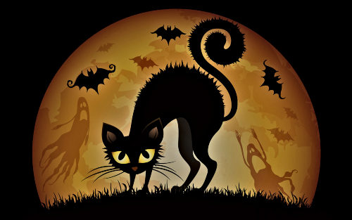 halloween black cat 1280