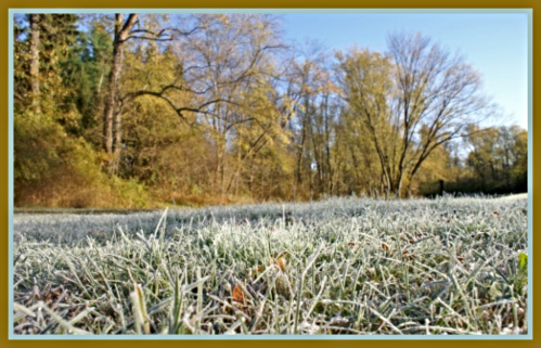 2019 11 13 morning frost on grass